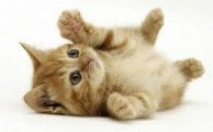 Five common cat skin problems