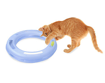 cat toy crazy circle