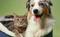 Five reasons cats are better pets than dogs