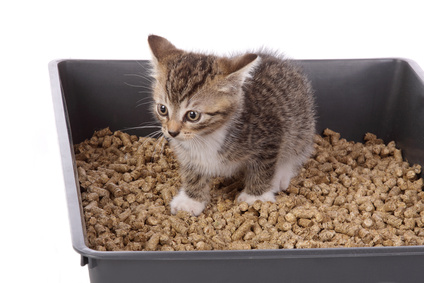 Litter training for cats and kittens