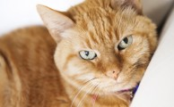 Five ways you are a making your cat hate you