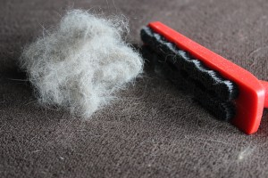 Five ways you can clean cat hairs