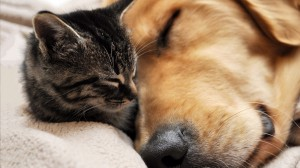 How to manage cat and dog to live within same house