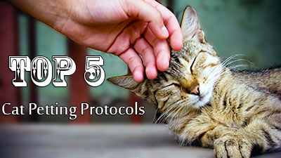 Top Five Cat Petting Protocols