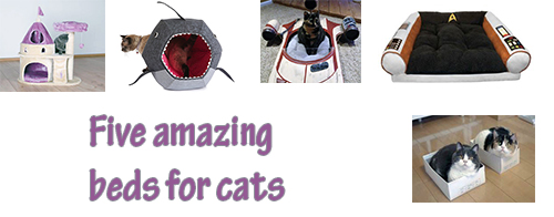 Five amazing beds for cats